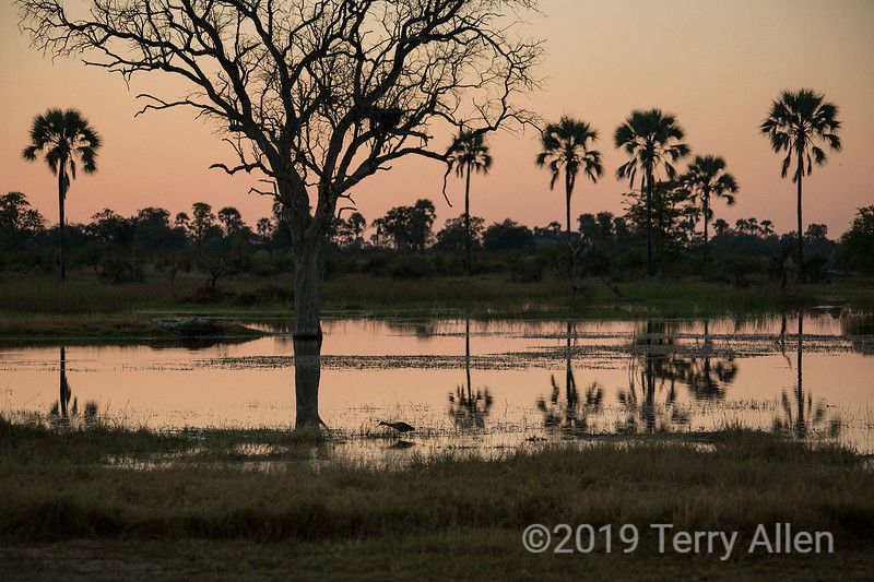 Sunset in the Okavango Delta, Botswana<br /> <br /> At the larger sizes you can see a heron fishing by the shore.