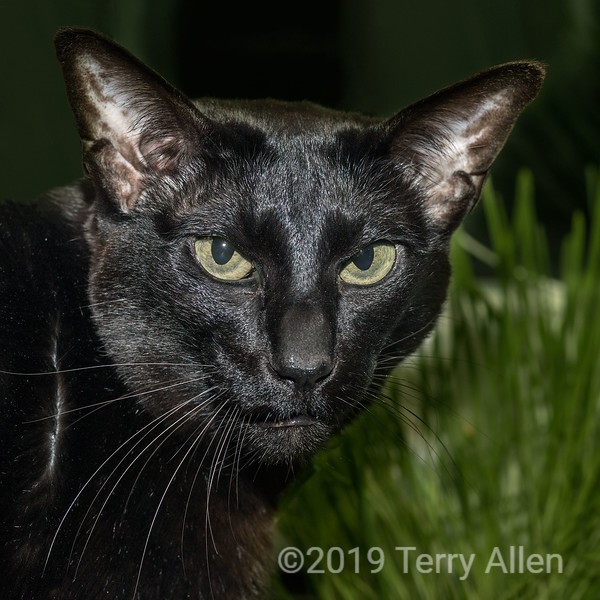 Black 'panther', in reminiscence of the Black Panther Party.  <br /> <br /> The Black Panther Party was an African-American organization founded in 1966 by Huey P. Newton and Bobby Seale.  Its members were involved in the Black Power movement and gained national and international notoriety.  Rocky (Burnley) Jones, a friend from the old days, was responsible for bringing the Black Panther Party to Canada.  In his long and distinguished career, he has been very much 'At the Crossroads of Freedom and Equality'.