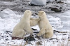 Happy Valentine's Day!<br /> <br /> Taken near the Seal River Lodge, Northern Manitoba