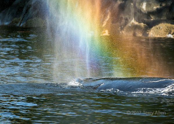 Spouting rainbows