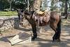 Mexican charro saddle