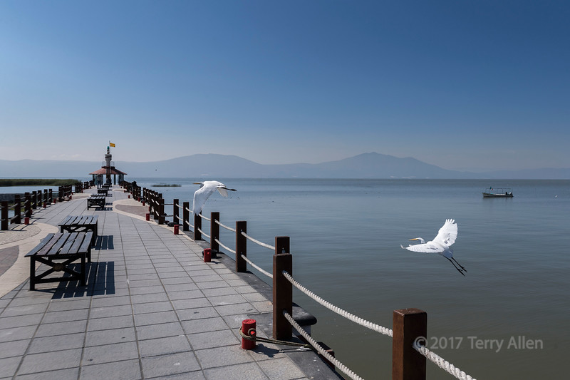 Pier and egrets
