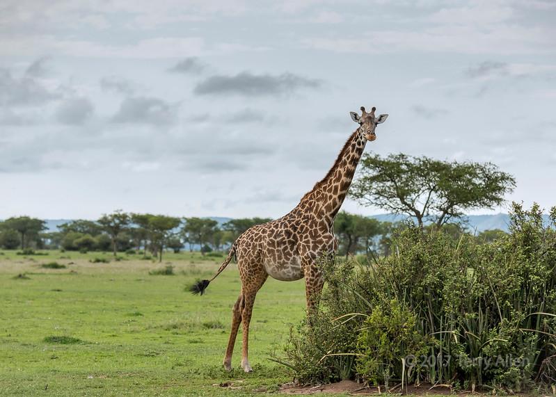 On the savanna