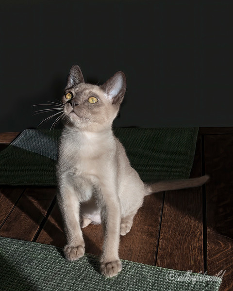 Where's my breakfast?