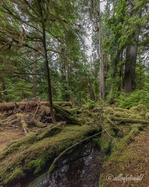 Windy Bay Creek