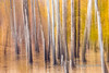 "Tamarck and birch trees (best larger)<br /> <br /> Taken in Gorkhi-Terelj National Park, Mongolia. Taken in camera using only camera motion;  no filters or other digital manipulation was applied.  These photos are part of my series to explore achieving interesting effects without the use of digital filters or artificial lighting. Note that even though it looks like the trees are standing in water, there was no water present on the ground.<br /> <br /> If you like this photo, you might enjoy the others seen here: <a href=""http://goo.gl/OLBMIM"">http://goo.gl/OLBMIM</a><br /> <br /> 02/02/15  <a href=""http://www.allenfotowild.com"">http://www.allenfotowild.com</a>"
