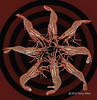 "Eight shrimp practicing their shrimp ring routine (best larger)<br /> <br /> Old photo with a new treatment (no time to do anything else for the still life challenge)<br /> <br /> 08/02/15  <a href=""http://www.allenfotowild.com"">http://www.allenfotowild.com</a>"