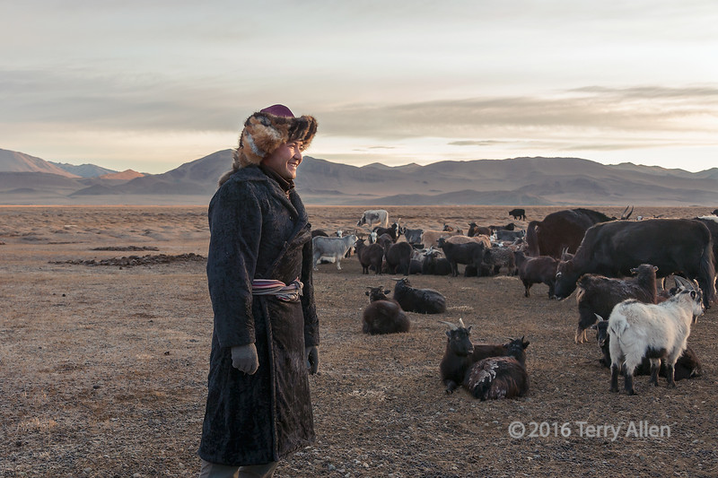 """Sunrise with the herd<br /> <br /> Near a herder's ger, Western Mongolia<br /> <br /> Other photos from the area can be seen here: <a href=""""http://goo.gl/6ZsPJx"""">http://goo.gl/6ZsPJx</a><br /> <br /> 16/05/15  <a href=""""http://www.allenfotowild.com"""">http://www.allenfotowild.com</a>"""