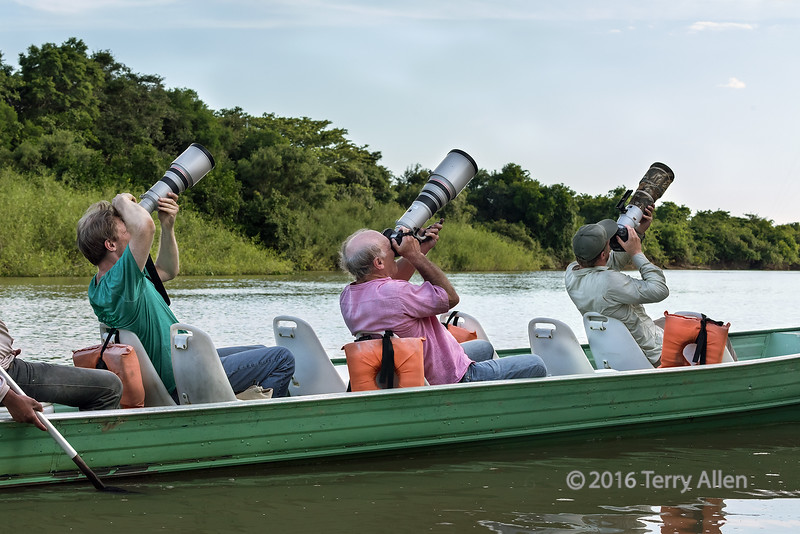 """Look up, way up!<br /> <br /> Canon photographers practicing their synchronization skills, Pixaim River, Pantanal, Brazil<br /> <br /> Other photos of the Pantanal wildlife can be seen here: <a href=""""http://goo.gl/dwDL9o"""">http://goo.gl/dwDL9o</a><br /> <br /> 05/04/14  <a href=""""http://www.allenfotowild.com"""">http://www.allenfotowild.com</a>"""