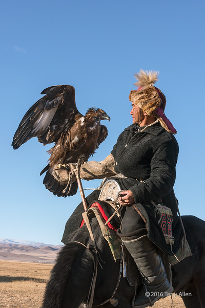 """A bond of trust<br /> <br /> The relationship between a raptor and its handler is an opportunistic one where the eagle trusts the handler to protect it and provide it with food and the handler trusts the eagle to return to him (or in rare cases, her) after releasing the eagle to hunt. <br /> <br /> The hunters take female eagles from the nest when they are ready to fly and train them to hunt and return to their owners. They keep the eagles for about 6 years until they are sexually mature and then release them to the wild so they can breed, leaving them with a gift of an animal carcass to help feed them as they adjust to the wild.  Hence the practice of eagle hunting does not impact the wild population of birds.<br /> <br /> The Kazakh hunters use the eagle to hunt fox and rabbits for their furs, which they wear (most hunters, as this one is, wear a fox fur hat), and to supplement their meagre diet in the winter.<br /> <br /> Other photos of this eagle trainer mounting his horse and riding off with his eagle can be seen here: <a href=""""http://goo.gl/4rH0OS"""">http://goo.gl/4rH0OS</a><br /> <br /> 16/03/15  <a href=""""http://www.allenfotowild.com"""">http://www.allenfotowild.com</a>"""