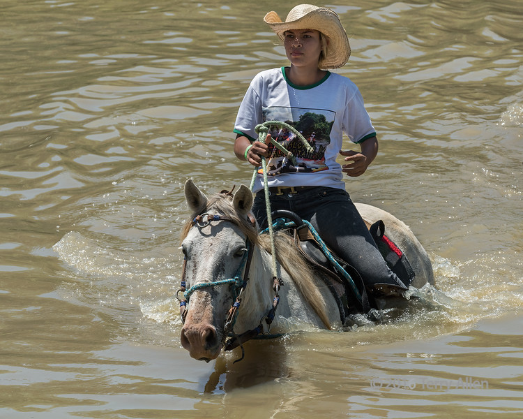 """Crossing the river<br /> <br /> Every year in the fall in the Pantanal they have a festival called Calvacado do Cavalo Pantaneiro (Cavalcade of Pantanal Horses) where ~150 horses and riders party and whoop it up and ride from fazenda to fazenda across the Pixaim River.  It is a ribald occasion with lots of drinking, selfies and hilarity as people fall off their horses into the river.  <br /> <br /> This girl was a good rider and made it across without falling in.  Note the sunlight freckles on her face where the light came through her straw cowboy hat.  <br /> <br /> It was difficult photography since the event took place midday with very bright contrasty light and deep shadows, so even shooting in RAW didn't completely help.  I did my best to rescue the photographs in Photoshop, but they would have been better had the event taken place later in the day.<br /> <br /> Other photos of this occasion, plus a couple more wildlife shots, can be seen here (plus more to follow): <a href=""""http://goo.gl/VMlwLK"""">http://goo.gl/VMlwLK</a><br /> <br /> 30/03/15  <a href=""""http://www.allenfotowild.com"""">http://www.allenfotowild.com</a>"""