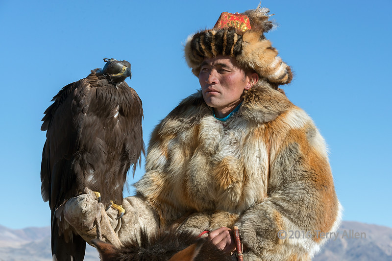 "Portrait of an eagle hunter and his eagle #3, Western Mongolia<br /> <br /> Check out his magnificent red fox fur coat.  Fox and rabbits are the main prey hunted by the trained eagles, and both species are used for food to supplement their meagre diets in the winter, and for their fur as protection against the bitter weather.  The fox fur hat with red silk and feathers (owl I think) at the crown is always part of their traditional attire when they are out with their eagles.<br /> <br /> A series of portraits of the eagle hunters can be seen here: <a href=""http://goo.gl/AdmHpE"">http://goo.gl/AdmHpE</a><br /> <br /> 17/04/15  <a href=""http://www.allenfotowild.com"">http://www.allenfotowild.com</a>"