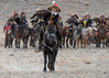 "Pulcritudinous (beautiful, comely) girl: Ashol Pan, Mongolia's only female eagle hunter  (best larger)<br /> <br /> The second contest of the day at the Eagle Festival was for the best Kazakh eagle, costume and horse harness.  Ashol Pan is riding over to the judges, with the rest of the field waiting their turn in the rear.<br /> <br /> Other photos from the Eagle Festival can be seen here: <a href=""http://goo.gl/82dsNB"">http://goo.gl/82dsNB</a><br /> <br /> 26/06/15  <a href=""http://www.allenfotowild.com"">http://www.allenfotowild.com</a>"