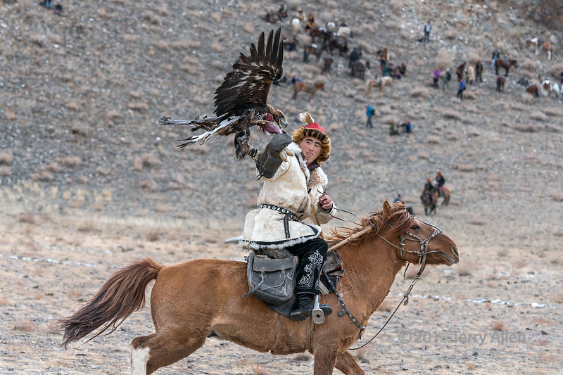 """Golden eagle latching onto the lure (best larger)<br /> <br /> Competition to lure the eagle from the mountain top back to its handler's arm while he is riding fast on horseback (easier said than done!!), Eagle Festival, Olgii, Western Mongolia (<br /> <br /> Other photos of various competitors in the eagle luring competition can be seen here: <a href=""""http://goo.gl/AjY7PT"""">http://goo.gl/AjY7PT</a><br /> <br /> 21/07/15  <a href=""""http://www.allenfotwild.com"""">http://www.allenfotwild.com</a>"""