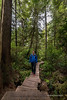 "Meares Island Big Tree trail: biodiversity (the variety of life in a particular habitat or ecosystem)<br /> <br /> Meares Island on the West Coast of Vancouver Island, has some of the largest and oldest trees on the planet.  The western red cedars (Thuja plicata) are from 1000-1500 years old, and up to 60 feet in diameter and over 200 ft (60 m) tall.  It was the site of an anti-logging protest in 1984 by the Nuu-chah-nulth aborignal people who claim it as ancestral land, supported by many environmentalists, some of who went to jail for the cause.  In the end the court ruled against logging and the old growth temperate rain forest remains intact.  <br /> <br /> A wooden board walk was constructed to give access to the largest trees and this young man who was hiking the Big Trees trail kindly agreed to be photographed if I would give him a copy of the photo (promise kept).<br /> <br /> It's a wonderful place to photograph but very challenging to capture due to low light, the enormous height and girth of the trees, and the dense vegetation.  I used a tripod, a wide angle lens (12 mm to 24 mm), and low ISO to try to capture the details.  This is a formula that only works when there is little or no wind, and an overcast day to avoid blowing highlights.  I was lucky to have both.<br /> <br /> Other photos from the Ucleulet/Tofino area can be seen here: <a href=""http://goo.gl/0lzthQ"">http://goo.gl/0lzthQ</a><br /> <br /> 19/06/15  <a href=""http://www.allenfotowild.com"">http://www.allenfotowild.com</a>"