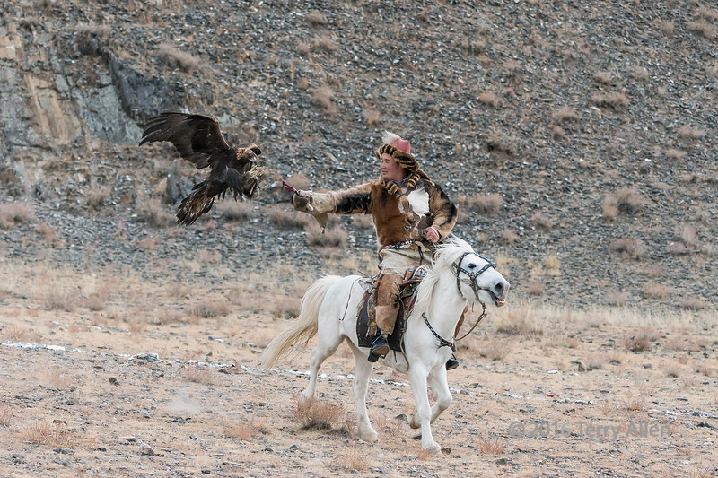 """Almost there! (best full size)<br /> <br /> This photo captures the instant before the eagle takes the lure in the competition for the eagle to return to its owner, Eagle Festivel, Olgii, Western Mongolia<br /> <br /> The previous frame, taken a fraction of a second before this, by comparison to this frame, shows the speed at which the eagle moves. See here: <a href=""""http://goo.gl/ecr0QJ"""">http://goo.gl/ecr0QJ</a><br /> <br /> 30/07/15  <a href=""""http://www.allenfotowild.com"""">http://www.allenfotowild.com</a>"""