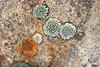 Lichen circles