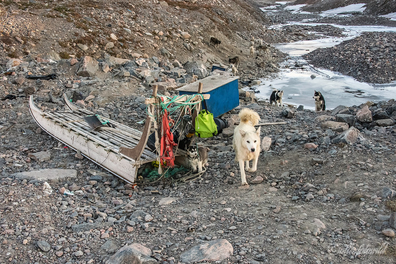 Mother sled dog and puppy