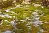 Mosses in a frozen stream