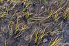 Still life with grasses