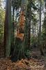 Woodpecker tree