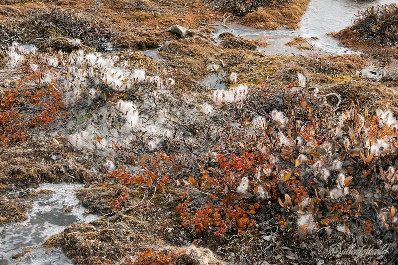 Arctic fall