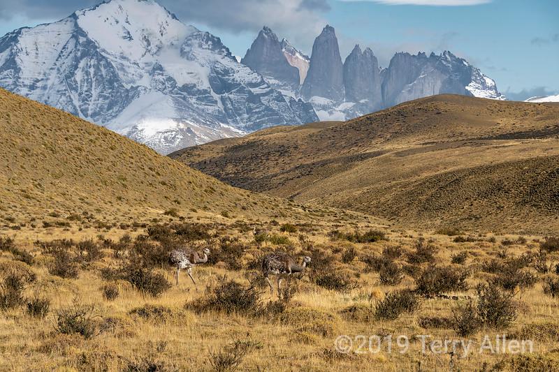 Find the rheas