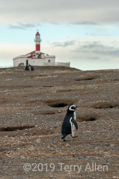 Penguin and lighthouse