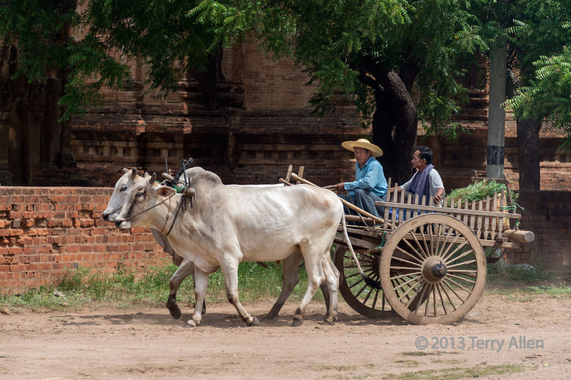 """Portrait of two locals driving an ox cart with a basket of fodder past a temple complex, Bagan region, Myanmar<br /> <br /> I couldn't decide between this photo, and an interesting photo with many repeated vertical lines that has visual appeal  <a href=""""http://goo.gl/dlSe4"""">http://goo.gl/dlSe4</a>).  I have also posted an interesting image of a relic stupa showing how they were constructed.<br />  <br /> Re Ilene's comment: I shoot with a Nikon D800.  I've tried some smaller sensor cameras and while I appreciate their greater portability, they don't give me the quality of image that I look for.  I came to photography through an interest in fine art (painting) and in using photography as way of documenting a scene that I might make a painting from.  So I want to produce the best images possible in the circumstance.  Over the years, I've come to appreciate photography as an art form in its own right, and like many of you, work hard to produce high quality images.  A well known artist friend uses some of my images in her artwork, so I am still connected to the fine art side of the business through her: <a href=""""http://www.bearclawgallery.com/Paintings.aspx?ArtistID=19"""">http://www.bearclawgallery.com/Paintings.aspx?ArtistID=19</a>"""