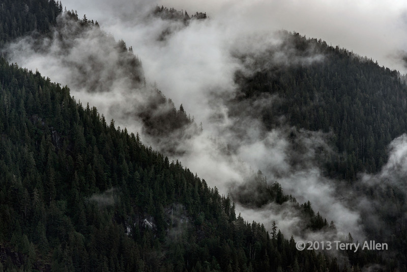 """Morning mists in the mountains<br /> <br /> Khutze inlet in the Great Bear Rain forest, northern BC.  This is a common sight in the north temperate rainforest as the sun starts to burn off the morning mist from the deep canyons and fjords. But it is hard to capture the true beauty and three dimensionality of the scene with a camera.  You really have to be there to see it in person.  <br /> <br /> This roadless wilderness is the largest tract of undisturbed north temperate rainforest in the world. and is the area that will be endangered by potential spills from oil tankers if the northern pipeline is built from the Alberta tar sands out to the coast near here.<br /> <br /> A beautiful B/W version of a similar scene can be seen here, along with some shoreline images of the rich intertidal zone: <a href=""""http://goo.gl/W9Zsqx"""">http://goo.gl/W9Zsqx</a><br /> <br /> Re SM vs Flickr vs FB. Now that SM appears to be 'fixed' I find myself in a quandary.  During the downtimes on SM a couple members of our community, with the support of the rest of the community, have gone to a lot of trouble and research to set up alternate daily communities on Flickr and Facebook, and I appreciate and thank them for their efforts.  Now there is the potential for the same images to appear on two or all three sites.  So now I don't know whether to comment and/or post on SM or  Flickr or Facebook. But I have too little spare time to follow two, let alone three, communities and keep track of which image I posted, and which I commented on, and where. What's a person to do? I guess if SM starts work properly, I will continue to post and comment here, with the occasional post and comment in Flickr, and will mostly ignore Facebook.  What will you do?"""