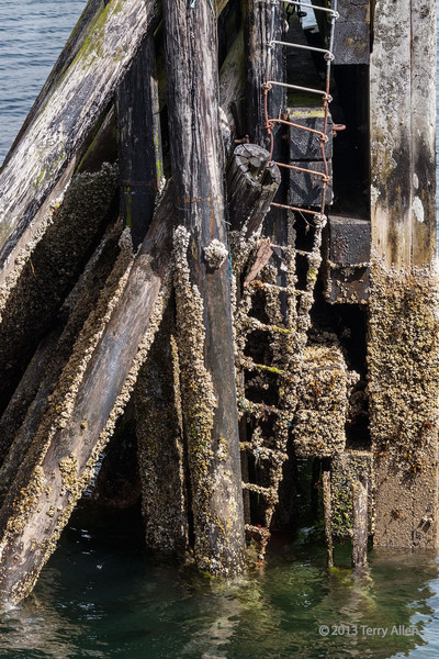 """Remains of old pier-2 at low tide, Bella Bella, BC<br /> <br /> The tidal range can be over 25 feet at times on the northern BC coast, and at low tide a rich intertidal community is exposed.  This old disused pier is covered with barnacles and mussels. For photos of an old tug and a fisheries research boat see here: <a href=""""http://goo.gl/RknQF"""">http://goo.gl/RknQF</a>"""