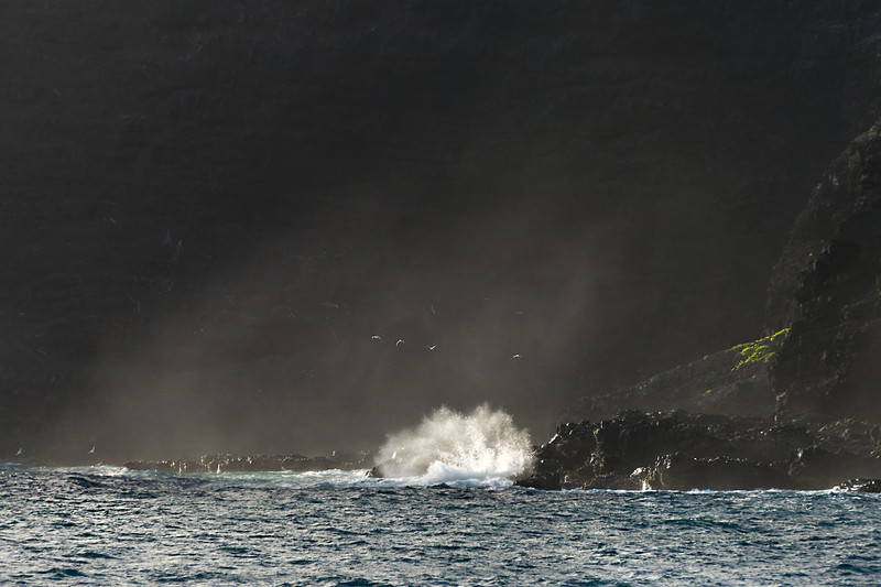 """Catching the morning light.<br /> <br /> Lava cliff with waves, spray and birds, Makapuu, Oahu<br /> <br /> As I was leaving Makapuu Point after sunrise, I looked back at the lava cliff and it was backlit and very dark except for the shoreline, where the waves, the spray, some white birds (shearwaters) and a small patch of green were catching the light.  I hope I've managed to capture the effect!   Best seen at larger sizes.<br /> <br /> Near the spot where this photo was taken is the Ku Heiau, a sacred spot dedicated to the Hawaiian god of war, Ku.  See photos and explanation here: <a href=""""http://goo.gl/f8IkJJ"""">http://goo.gl/f8IkJJ</a>"""