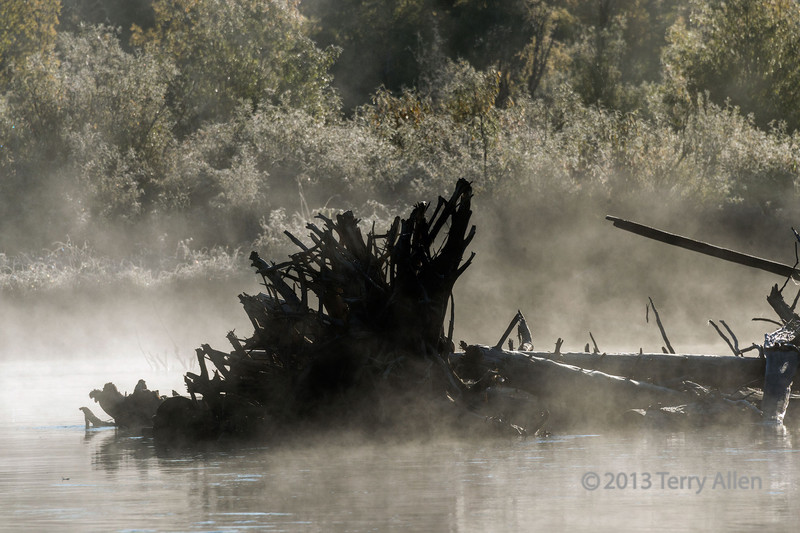 """Fallen tree in the early morning mist, Mitchell River, Cariboo-Chilcotin, British Columbia<br /> <br /> The morning mist and the frost on the vegetation muted the colours but enough sun came through the mist to back light the stump of the tree showing it in silhouette.<br /> <br /> A few more photos from this beautiful roadless wildness area can be seen here: <a href=""""http://goo.gl/PloIz5"""">http://goo.gl/PloIz5</a><br /> <br /> 20/11/13  <a href=""""http://www.allenfotowild.com"""">http://www.allenfotowild.com</a>"""
