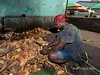 """Potrait of a man husking coconuts at the Honiara market, Guadalcanal Is, Solomon Islands<br /> <br /> Honiara has a huge market that sells almost everything.<br /> <br /> Update re DreamCatcher's question.  The husk of the coconut, called coir isn't wasted.  It is used in ropes, mats, door mats, brushes, sacks, caulking for boats, and as stuffing fiber for mattresses. It is also used in potting compost, especially in orchid mix.<br /> <br /> Other photos from the Honiara market can be seen here: <a href=""""http://goo.gl/cgtm2q"""">http://goo.gl/cgtm2q</a><br /> <br /> 5/11/13  <a href=""""http://www.allenfotowild.com"""">http://www.allenfotowild.com</a>"""