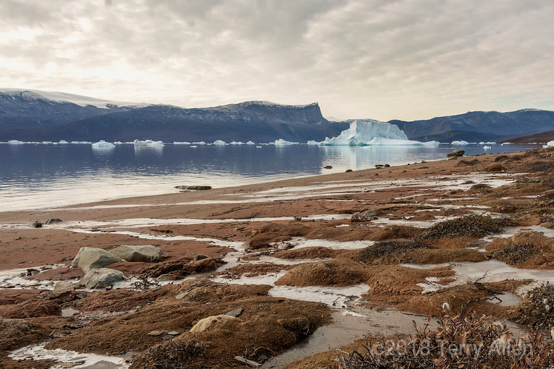 Harefjord with icebergs and streams.