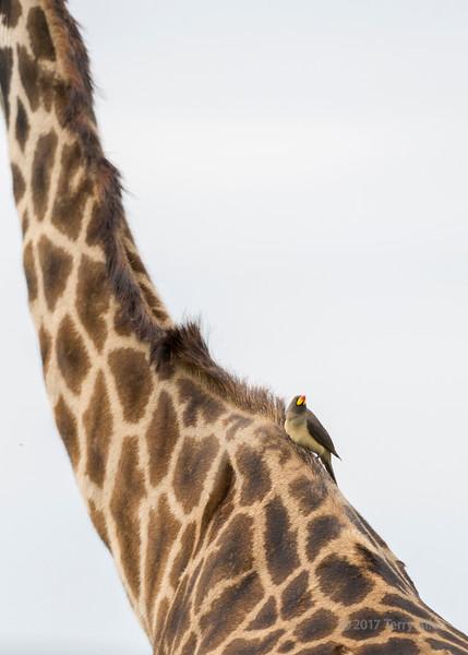 Long neck, small bird
