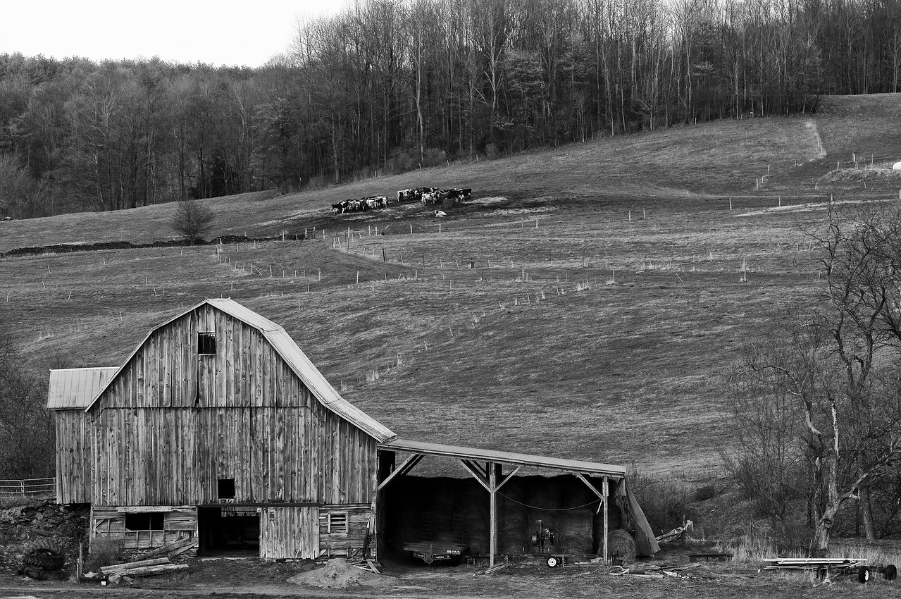 April 16 - Quaker Hill Road, Brookfield.  I don't often shot a barn straight on, yet the cows in the background called out for this shot.