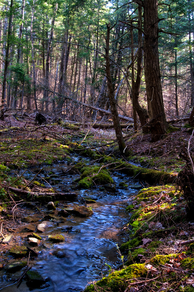 April 14 - The Brookfield Woods.  Beautiful Spring day.  This photograph does not show how dry things are considering it is mid-April.  This trickle would normally be seriously flowing in a normal April.  We want April Showers!
