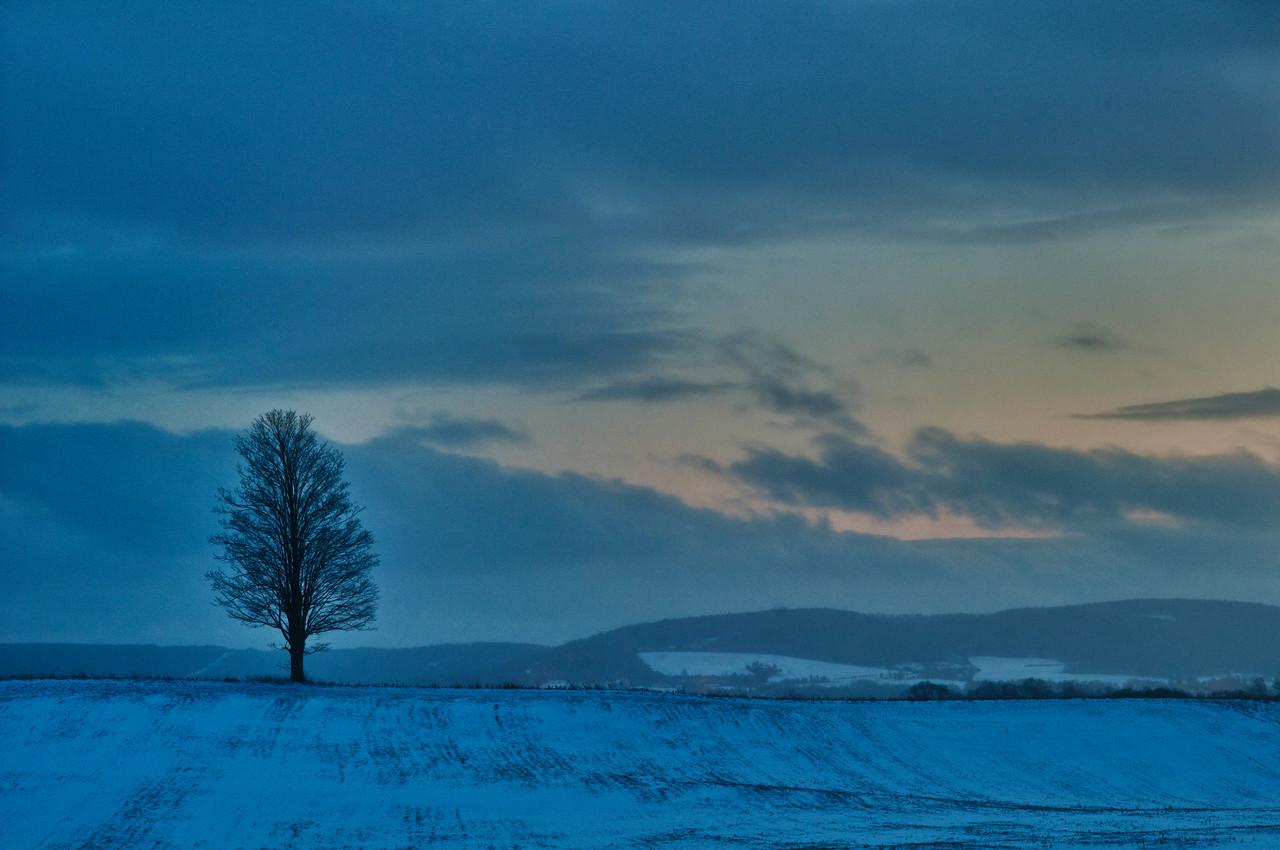 January 14 - Evening Tree