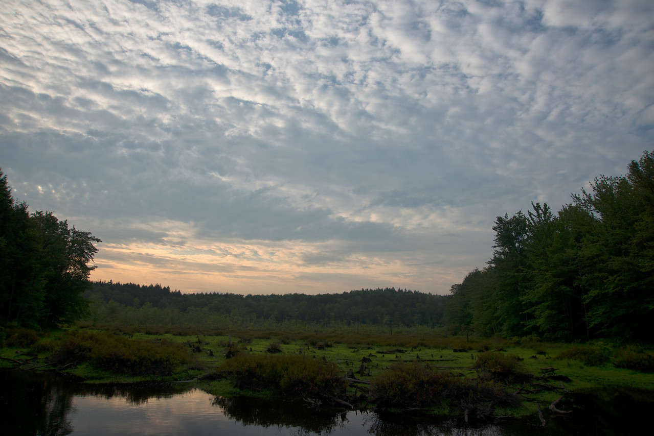 August 10 - Lost Pond in the Brookfield State Lands