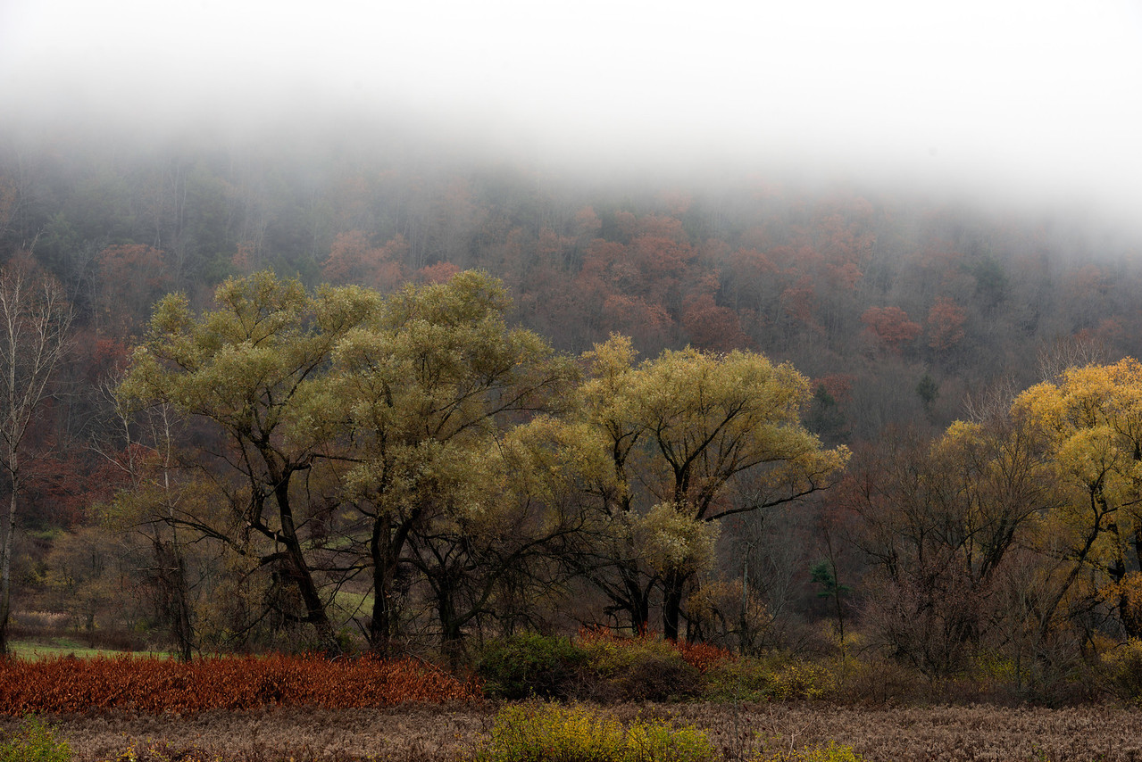 October 28 - The fog hangs in the trees.