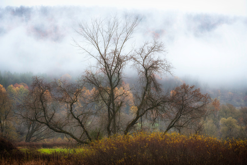 October 24 - The combination of fog, the tree, hillside in the background caught my eye.  Steam Saw Mill Hill Road, North Norwich, NY