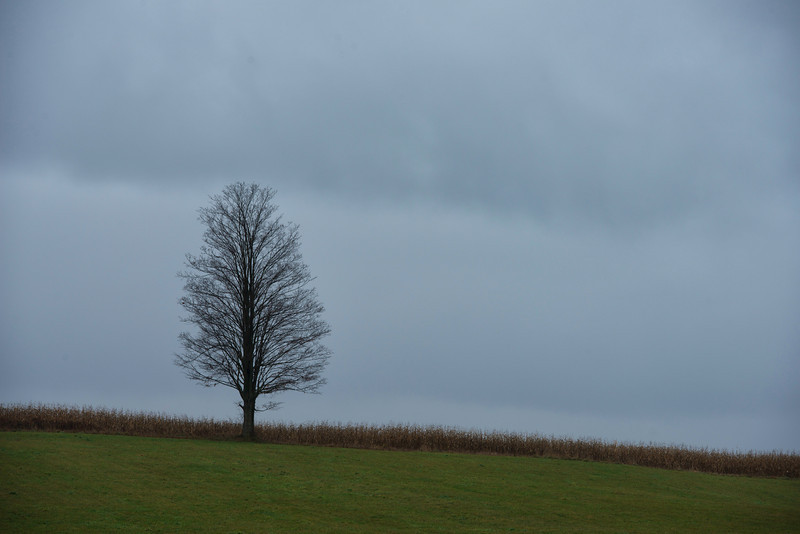November 1 - The month starts as a dreary rainy day here in central New York State.  Knapp Road, Sherburne, NY