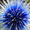 """DALLAS STAR""  by Dale Chihuly"