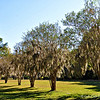 """ETHERAL SPANISH MOSS"""
