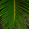 """ICE-COATED CYCAD"""