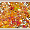 "Saturday, November 26, 2011    ""SHOWING OFF ITS COLORS""  ""The leaves fall, the wind blows, and the farm country slowly changes from the summer cottons into its winter wools."" ~ Henry Beston  The glory of the season is captured in these leaves featuring radiant autumn colors of gold, orange, and red. The frames were applied from PicNik.  Yesterday, my best friend and I spent the day in Memphis, TN and had a blast.......food, fun, photo ops, oh my!!! NO Black Friday shopping for us; we both hate overly crowded places!! We also exchanged Christmas gifts......Christmas in November, you could say.  On the other hand, last night, our hubbys attended a high school 2A division championship football game in another city and had a great time as well; the team that they were pulling for won!!! She and her family leave for home (Texas) this morning.  I will be attending a wedding today.  Have a great day everyone and thanks for your kind comments!!  Pentecostal Lighthouse Church  ***#14 photo of the day***  (photo taken 11/8/2011)"