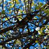 """HELLO, SPRING FLOWERS!"" (Bradford Pear Tree)"