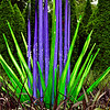"""""""FIORI"""" by Dale Chihuly"""