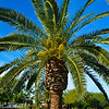 """""""PALM TREE"""" at My Dream Home/Estate"""